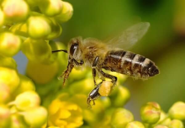 Αλλεργία σε τσίμπημα