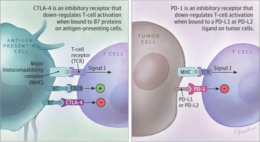 Ανοσολογία καρκίνου: Πως η ανοσοθεραπεία εμποδίζει την ενεργοποίηση των κακοήθων κυττάρων