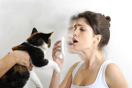 Οικιακά ζώα και αλλεργία: Τι γνωρίζετε;